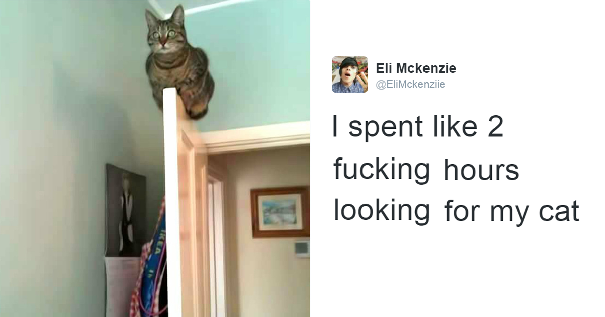 Funny Cat Tweets That Ruled The Internet Readers Cave - The 27 funniest tweets about cats in 2016