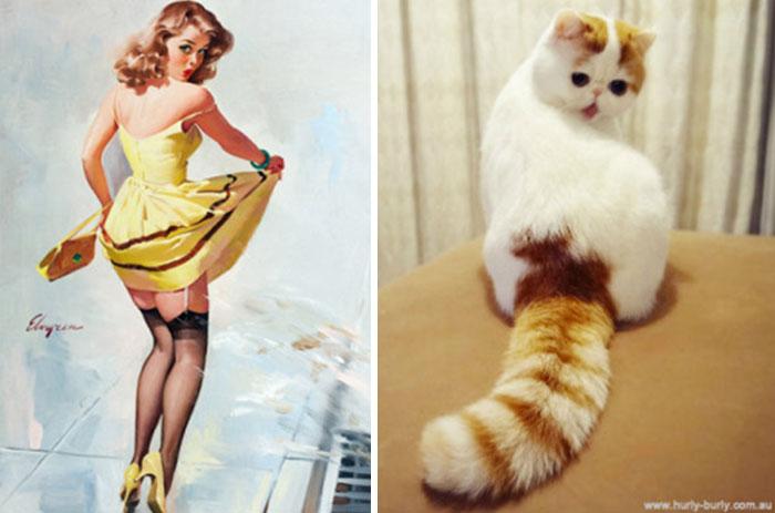 Funny Cats Posing 1
