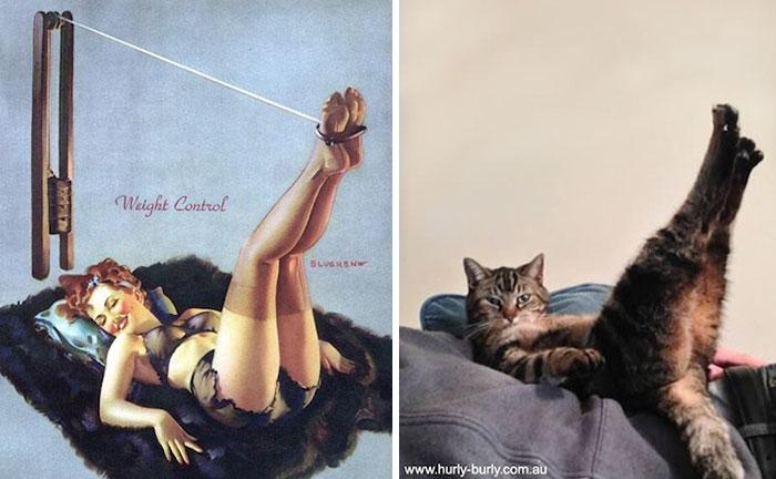 Funny Cats Posing 2
