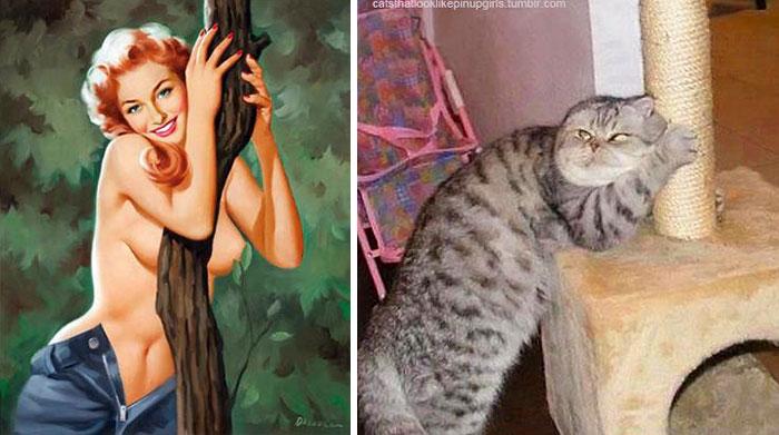 Funny Cats Posing 4