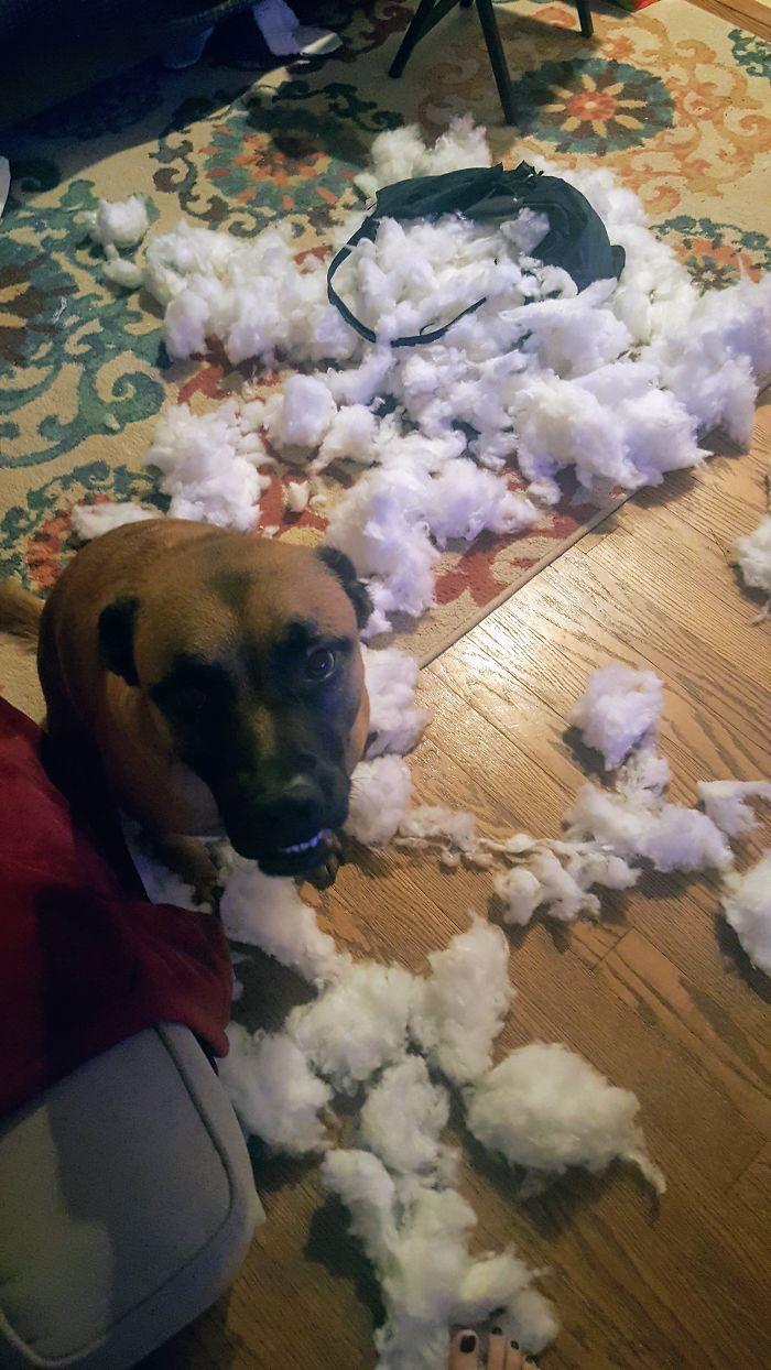 messy pets